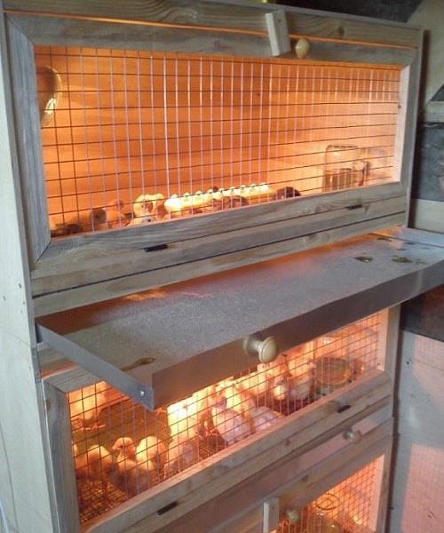Курятник для цыплят